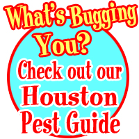 Houston Pest Guide